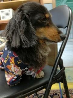 夏用犬の服 ブラウス
